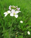 Fragile flower Stock Photo