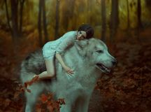 A fragile girl riding a wolf, like Princess Mononoke. Sleeping Beauty. Alaskan Malamute is like a wild wolf. The. Background is a fabulous forest in warm autumn stock image