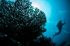 Fragile But Healthy Coral Reef in Raja Ampat royalty free stock photos