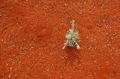 Fragile Life in a Harsh Desert Royalty Free Stock Photography