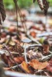 Fragile mushroom stock images