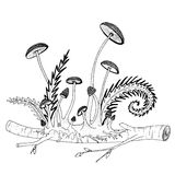 Fragile mushrooms growing from a twig, with ferns, buds and stems. Hand drawn illustration for coloring books. A wooden twig with a colony of fragile mushrooms Royalty Free Stock Photos