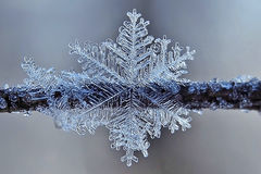 Fragile snowflake hanging on a branch in winter Park Royalty Free Stock Photo