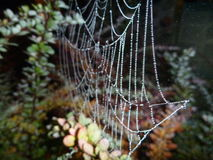 Fragile spider web on a branch in the night Stock Image