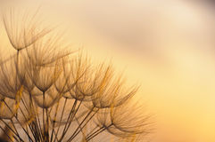 Fragile sunset Royalty Free Stock Photo