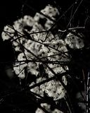Fragile winter blossoms in backlight Stock Photos