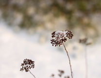 Fragile winter impression Stock Image