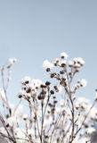 Fragile winter reeds Royalty Free Stock Photos
