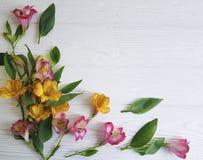 Fragilità della natura del fiore di Alstroemeria, bloomingon un fondo di legno bianco Immagine Stock Libera da Diritti