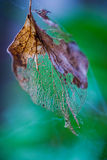 Fragility of nature. Close-up of an autumn leaf against colorful background Royalty Free Stock Photos