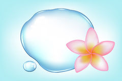 Fragipani Over Water. Vector Royalty Free Stock Image