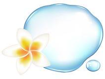 Fragipani sobre a água Fotografia de Stock Royalty Free