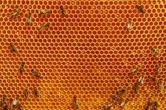 Fragmen de un panal de la miel con las abejas y la miel fresca Miel natural Foto de archivo