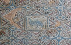 Fragment of ancient mosaic floor. In Kourion. Cyprus Stock Photo