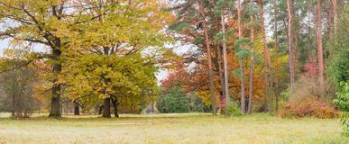 Fragment of the autumn park with deciduous and conifers trees. Panorama of the autumn landscape park with oaks and other deciduous and conifers trees Royalty Free Stock Images