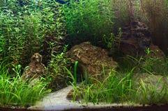 Fragment av det planterade akvariet Fotografering för Bildbyråer