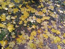 Fragment av hösten Brutet exponeringsglas från bladet royaltyfri foto