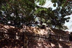 Fragment av taket av en forntida byggnad Tjock krona av ett träd royaltyfri fotografi