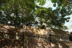 Fragment av taket av en forntida byggnad Tjock krona av ett tr?d arkivbild