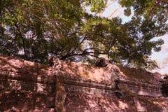 Fragment av taket av en forntida byggnad Tjock krona av ett tr?d royaltyfria bilder