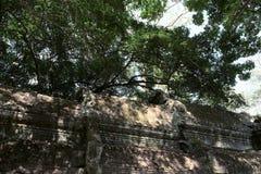 Fragment av taket av en forntida byggnad Tjock krona av ett tr?d fotografering för bildbyråer