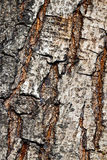 Fragment the bark of the old tree Stock Photo
