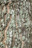A fragment of old birch bark, covered with lichen. Royalty Free Stock Photo