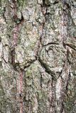 A fragment of old birch bark with cracks and lichen. Royalty Free Stock Photos