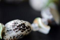 Fragment of bracelet made of shells Royalty Free Stock Image