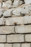 A fragment of a brick wall on which sits a butterfly Royalty Free Stock Image
