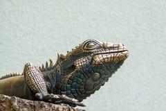 Fragment of a bronze lizard Stock Photos