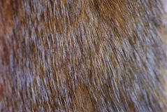 Fragment of brown mink fur Royalty Free Stock Images