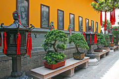 Fragment of Chinese Temple With Row Of Bonsai Trees Stock Images