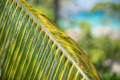 Fragment of closeup view of green palm leaf Stock Image