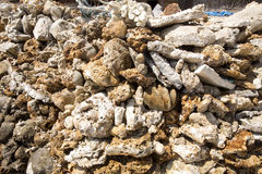 Fragment of coral on the beach, Nusa Penida, Indonesia Royalty Free Stock Photo