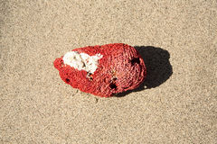 Fragment of coral on the beach, Nusa Penida, Indonesia Stock Photography