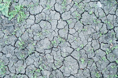 Fragment of cracked dry land with green grasses between, new life Stock Photo