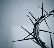 Crown of thorns. Fragment of the crown of thorns on a homogeneous background royalty free stock photos