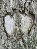 Fragment détaillé d'abrégé sur plan rapproché de vue de corps texturisé en difficulté ou endommagé d'arbre images libres de droits