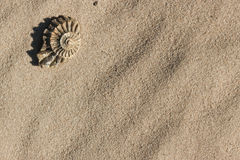 Fragment d'ammonite sur le sable Photo libre de droits