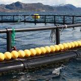 Fragment d'exploitation de pisciculture pour l'élevage saumoné Photos libres de droits