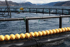 Fragment d'exploitation de pisciculture pour l'élevage saumoné Image stock