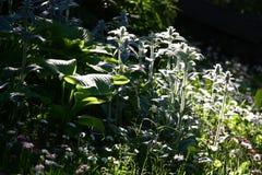 Fragment d'un jardin modeste Lumière et ombre Photographie stock libre de droits