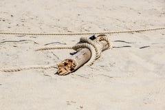Fragment de barrière nautique de corde avec en bois superficiel par les agents photographie stock libre de droits