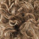Fragment de cheveux comme composition en fond Image libre de droits