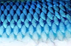Fragment de fond de photo des échelles de poissons Photographie stock