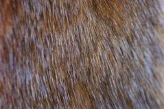 Fragment de fourrure brune de vison images libres de droits