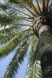 Fragment de palmier Image stock
