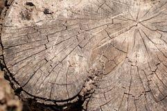 Fragment de tronçon en bois criqué Images stock