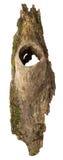 Fragment der Barke mit einer Höhle Lizenzfreies Stockfoto